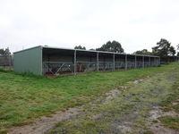 Animal, Calf, Livestock Shed with Gates - Jumbunna Engineering