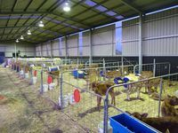 Calf Shed - Korumburra, South Gippsland - Jumbunna Engineering