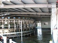 Cow Milking Shed - Jumbunna Engineering - Leongatha, South Gippsland