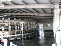 Cow Milking Shed - Jumbunna Engineering - Leongatha, South Gippsland